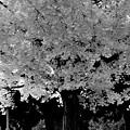 Tree to imagine