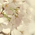 開花記念日