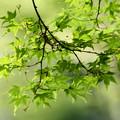 Photos: Green air