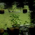 森のリズム