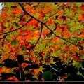 秋色 キャンバス