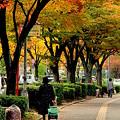 欅の散歩道