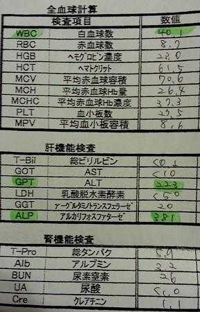 6/2木の葉_ 血液検査