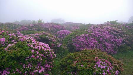 万年山~吉武台牧場から歩く(10)