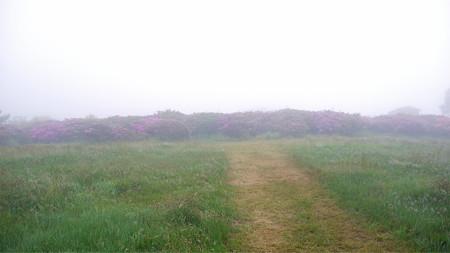 万年山~吉武台牧場から歩く(5)最初のミヤマキリシマ群生地