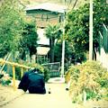 Photos: 坂道草