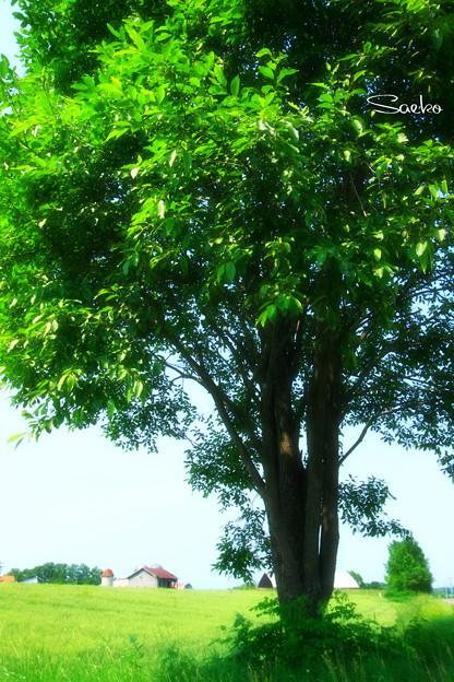 大きな××の~木の下で