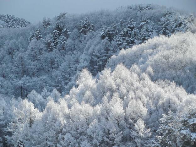 1月9日雪が降った32