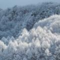Photos: 1月9日雪が降った32