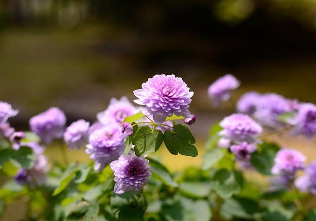 小さい花 4