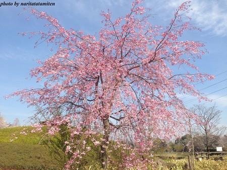 大宮花の丘公苑12