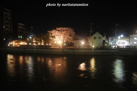 高橋屋さんの夜桜3