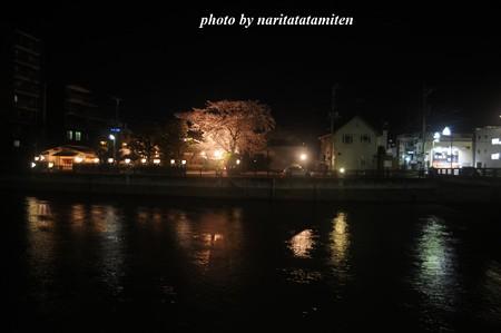 高橋屋さんの夜桜4