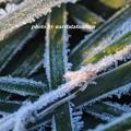 写真: 寒い03