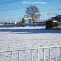 写真: 雪景色12