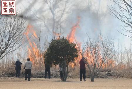 渡良瀬のヨシ焼き21