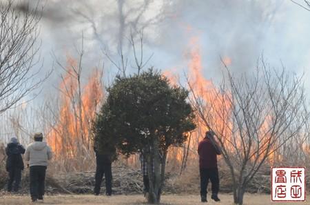 渡良瀬のヨシ焼き22