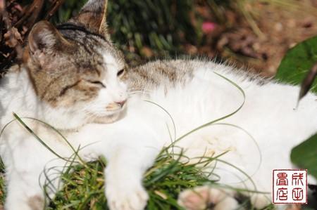 唐沢山の猫12