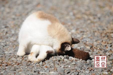 唐沢山の猫13