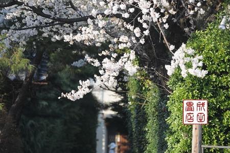 高橋家さんの桜03