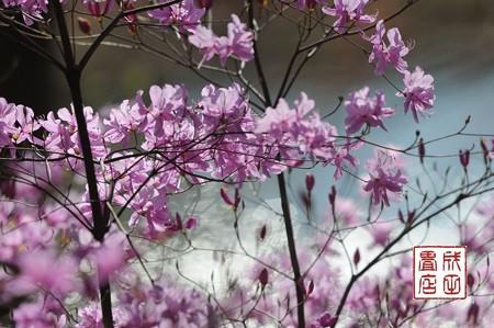 みかも山公園の花04
