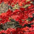 Photos: IMG_9349大山登山と紅葉