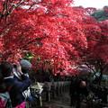 Photos: IMG_9367大山登山と紅葉