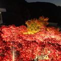 Photos: IMG_9464大山登山と紅葉