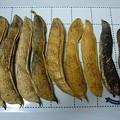 Photos: 140108-1 なた豆