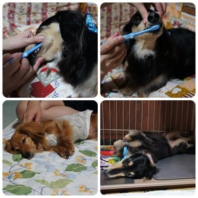 20120728 歯磨き→ネンネ