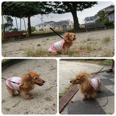 20120811 お散歩2