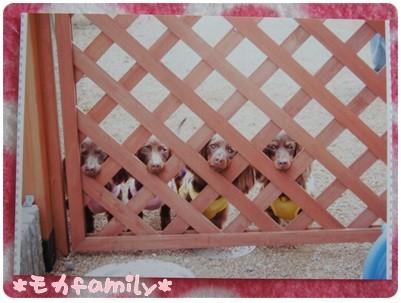 20120921 モカfamily