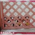 写真: 20120921 モカfamily