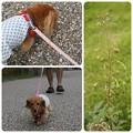 写真: 20120922 お散歩