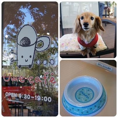 写真: 20121025 Ume cafe1