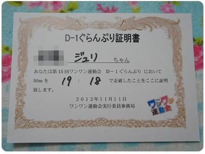 20121111 ワンワン運動会(D-1ぐらんぷり)