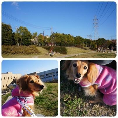 20121125 お散歩2
