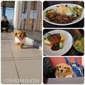 写真: 20130203 DOG GARDEN CAFE
