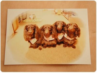 20130505 可愛いカード