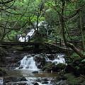 Photos: 七つ滝 三の滝