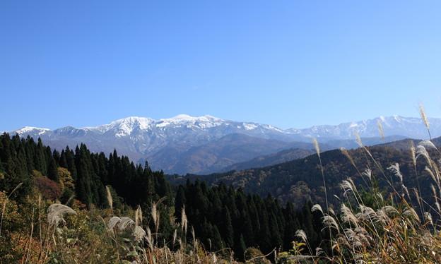 白山 雪化粧  紅葉とススキ