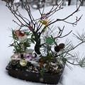 松竹梅の寄せ植え 雪・アラレ(2)