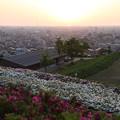 大乗寺丘陵公園  ツツジと夕陽
