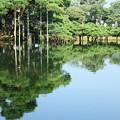 Photos: 兼六園 唐崎松 水に浮かぶ