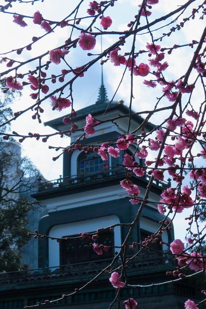 尾山神社 紅梅と神門(2)