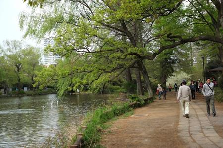 石神井公園_1