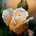 Crown Princess Margareta 2013