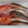 写真: 赤い魚たち