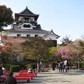 Photos: 国宝 犬山城
