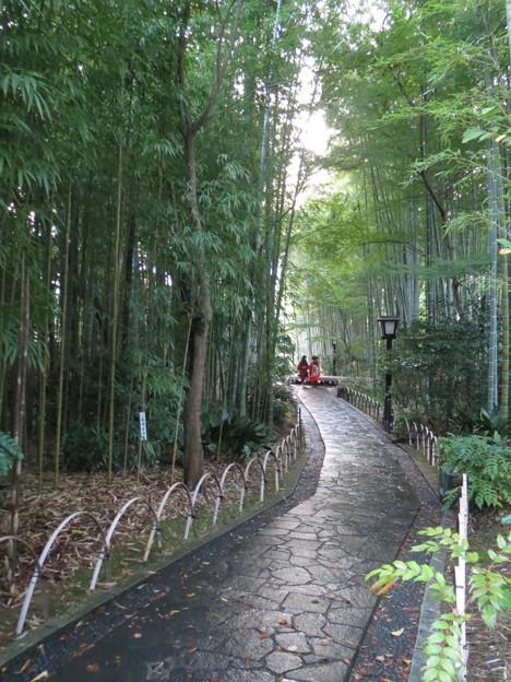 Photos: 竹林の小径(2)